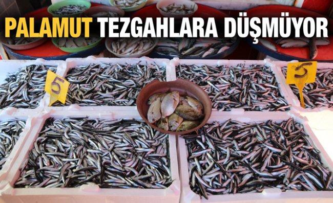 Balıkçılar Palamuttan Umutlarını Kesti