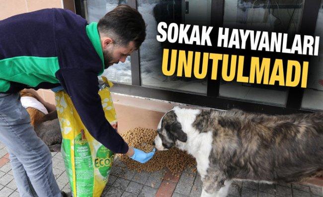 Sokak Hayvanları İçin Yem Dağıtıldı