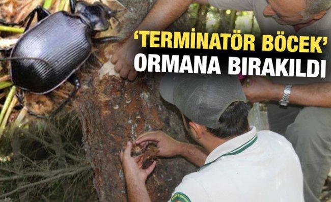 'Terminatör Böcek' Ladin Ormanları İçin Savaşacak