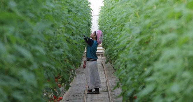Kadın Çiftçilere Yönelik Eğitim