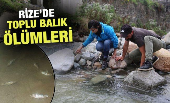 Hemşin'deki Toplu Balık Ölümleri İnceleniyor
