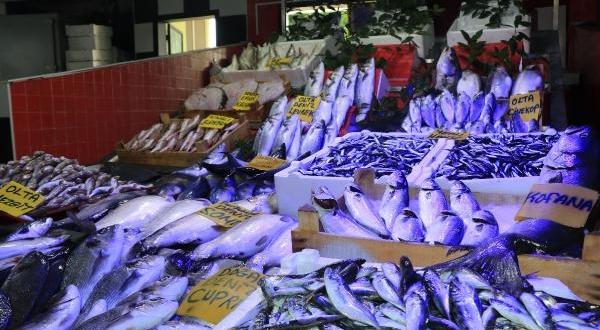 Deniz Suyu Isındı Balık Avı Azaldı