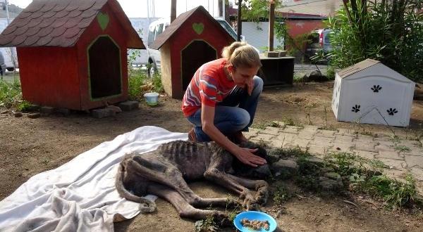 Ölüme Terk Edilen Köpeğe Sahip Çıktılar