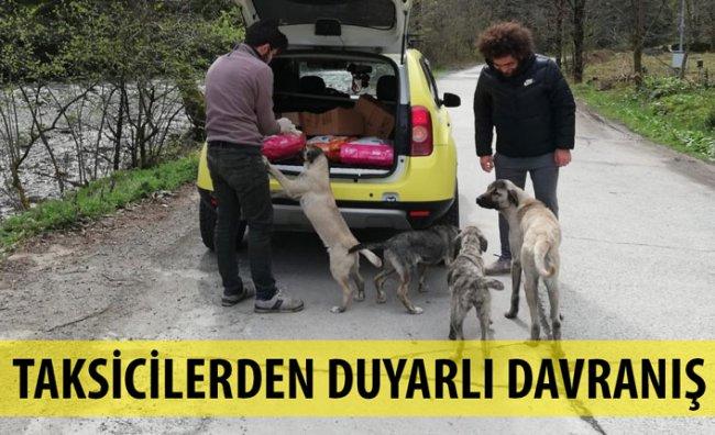 Taksi Şoförlerinden Sokak Hayvanlarına Mama Desteği