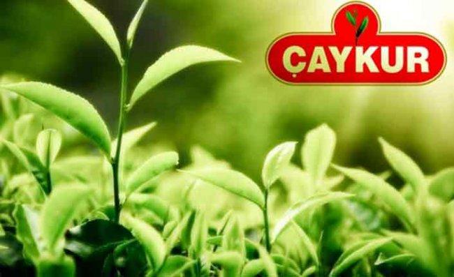 Çaykur'dan Kontenjan ve Yaş Çay Alımı Açıklaması