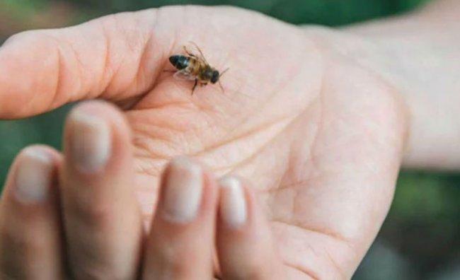 Arının Soktuğu Kadın Hayatını Kaybetti