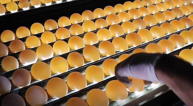 KDV İndirimi, Yumurta Üreticisine Nefes Aldırdı