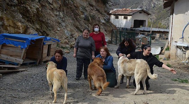 Gönüllülerden Engelli ve Hasta Köpeklere Şefkat Eli
