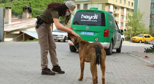 Artvin Polisi Sokak Hayvanlarını Unutmadı
