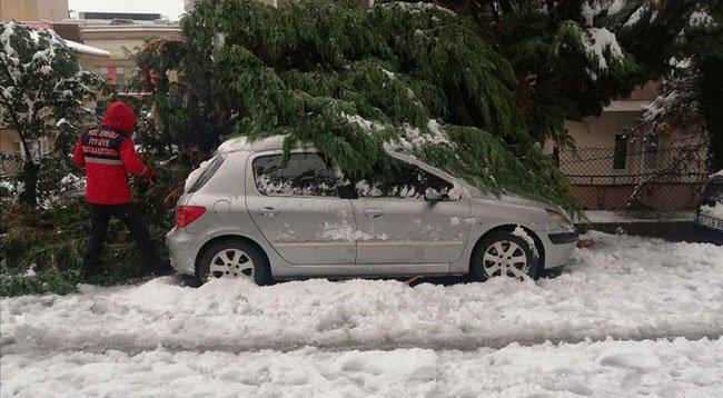 Yoğun Kar Yağışından Devrilen Ağaçlar 20 Otomobile Zarar Verdi