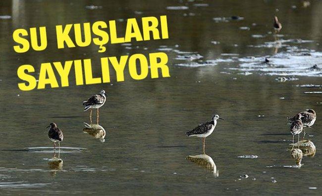 Orta ve Doğu Karadeniz'deki Su Kuşları Sayılıyor