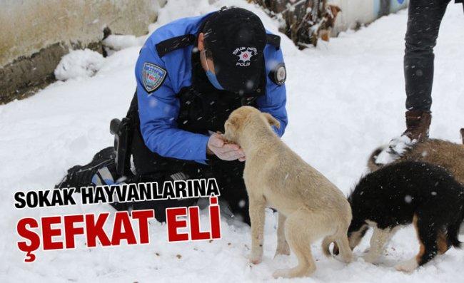 Rize'de Kar Yağışı Altında Kalan Sokak Hayvanları Unutulmadı