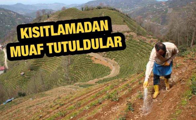 Doğu Karadeniz'de Çay Üreticilerine Kısıtlama Muafiyeti