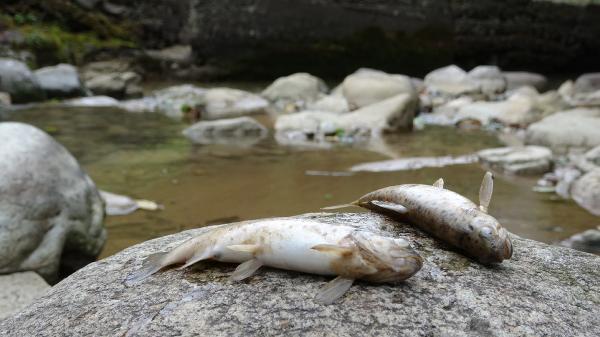 Toplu balık ölümleri endişelendiriyor
