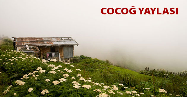 Cocoğ Yaylası