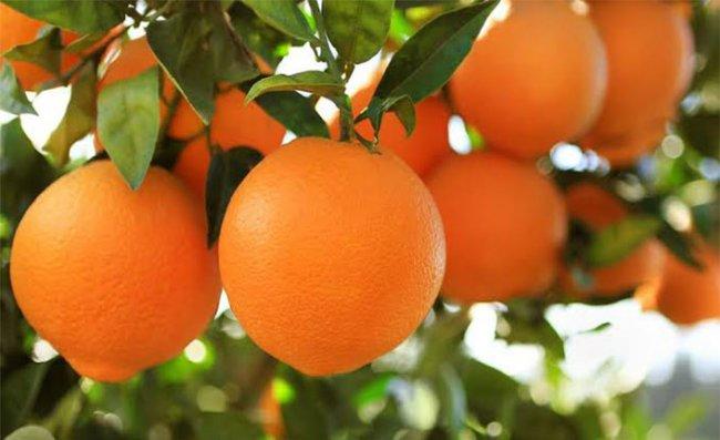 Haldozun Portakalı