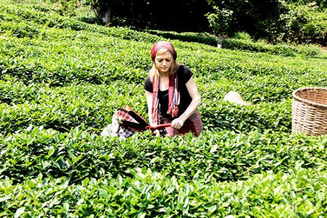 Çay toplayan kızlar