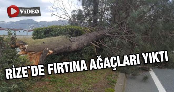Rize`De Fırtına Ağaçları Yıktı